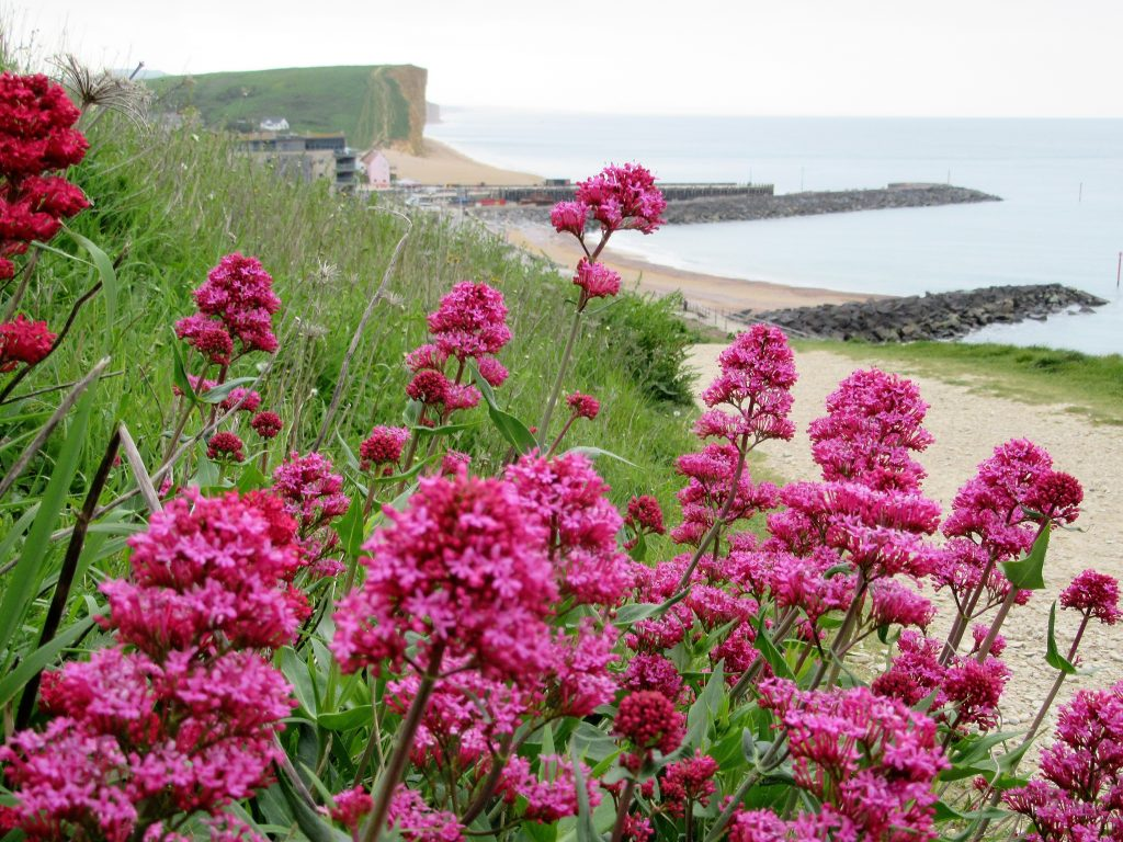 West Bay walks along the South West Coast path